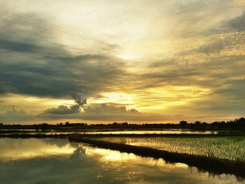 Solnedgång på fält på solnedgången royaltyfri bild
