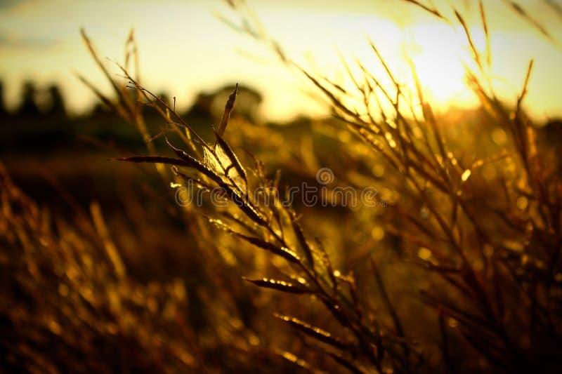 Solnedgång på fältet arkivfoto