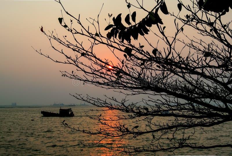 Solnedgång på havet med silhoette av trädet arkivbilder
