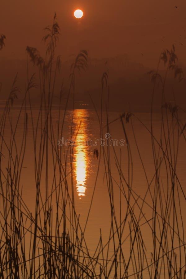 Solnedgång på Hosehill sjön, Berkshire, UK arkivfoto