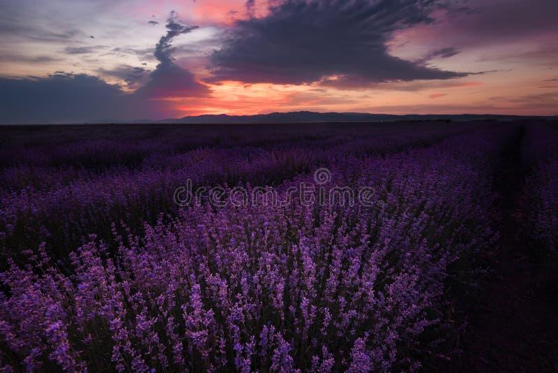 Solnedgång på lavendelfältet i Bulgarien royaltyfria foton