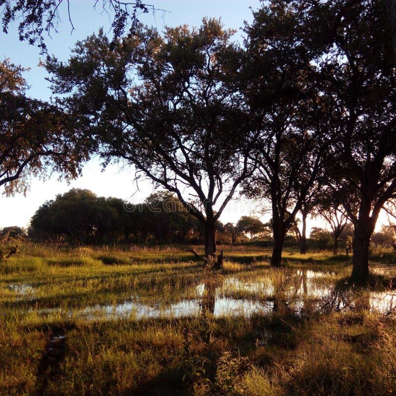 Solnedgång på Motswiri, Khwai, Botswana royaltyfri fotografi