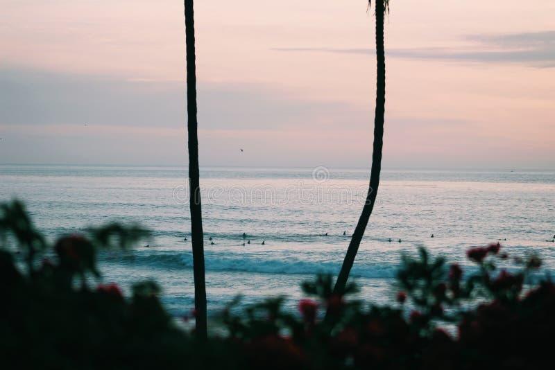 Solnedgång på stranden med växter och palmträdet royaltyfria foton