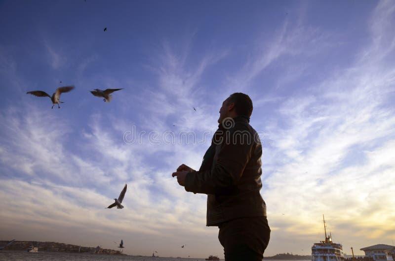 Solnedgång på strandseagullsna som mat-ger en man arkivfoton