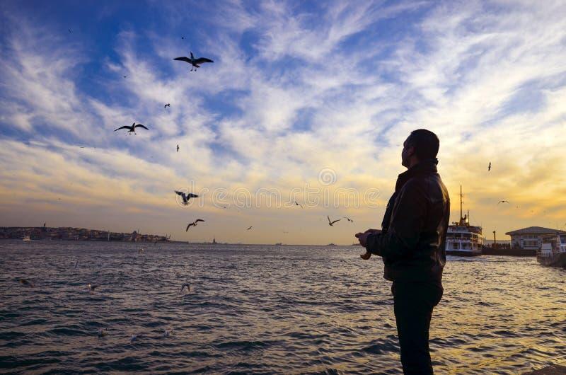Solnedgång på strandseagullsna som mat-ger en man royaltyfri foto
