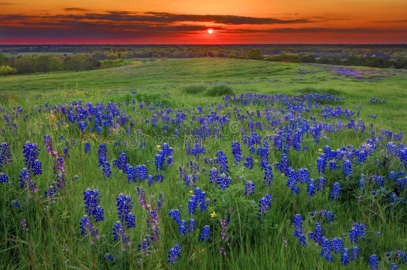 Solnedgång på Sugar Ridge Road, Ennis, TX royaltyfri bild