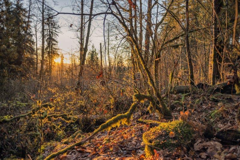 Solnedgång på Wallace Falls State Park arkivbild