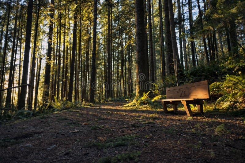 Solnedgång på Wallace Falls State Park royaltyfri fotografi