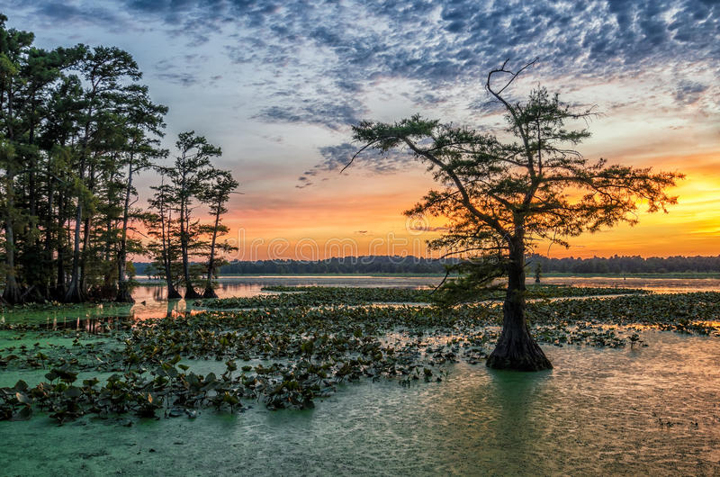 Solnedgång Reelfoot sjö i Tennessee royaltyfri foto