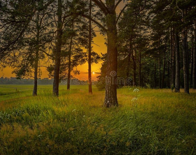 Download Solnedgång sikt från skog fotografering för bildbyråer. Bild av sceniskt - 27280269