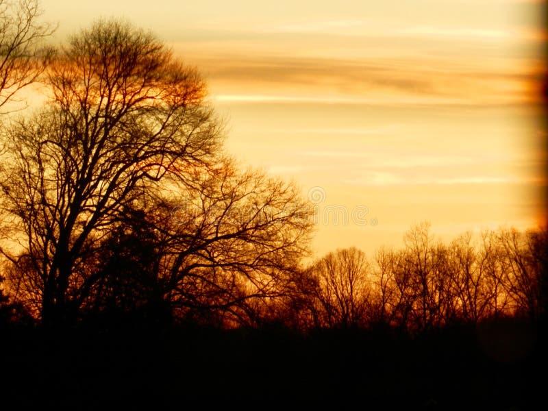 Solnedgång Silhouete arkivfoto