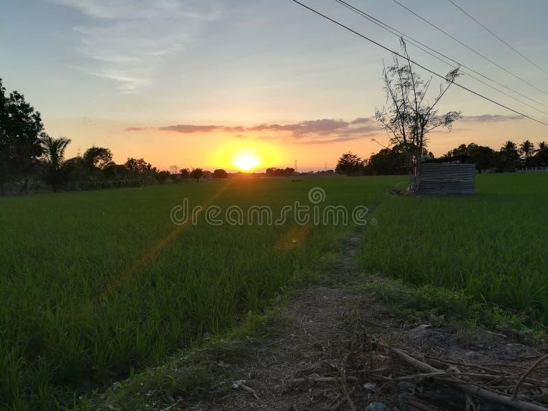 Solnedgång som ser över risfälten Slag för kalla brisar royaltyfri bild