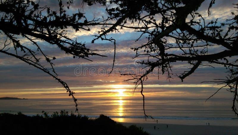 Solnedgång till och med filialerna arkivfoto