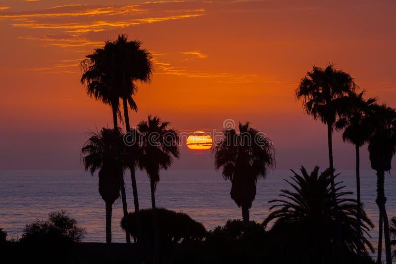 Solnedgång till och med palmträd över den La Jolla stranden Kalifornien royaltyfri foto