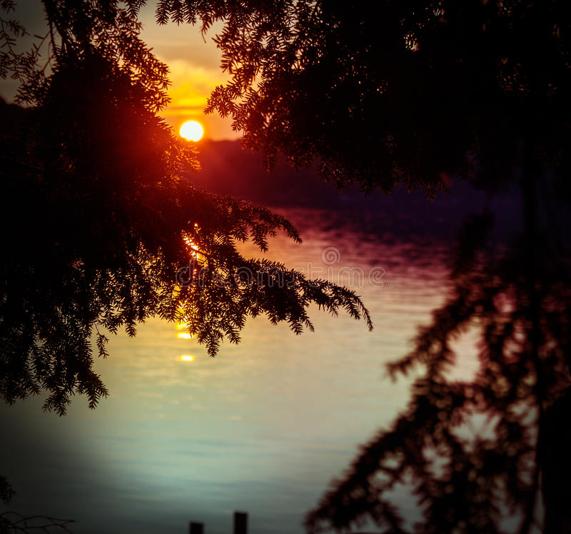 Solnedgång till och med träden på sjön arkivbild