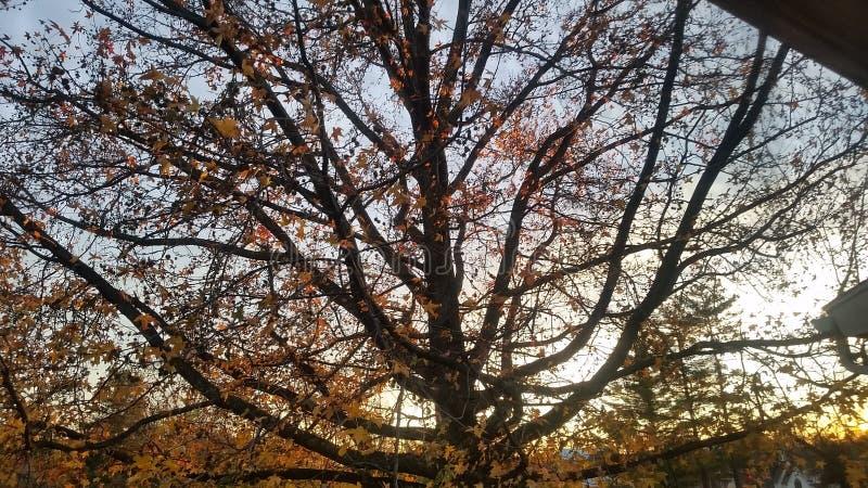 Solnedgång till och med trädet royaltyfria foton