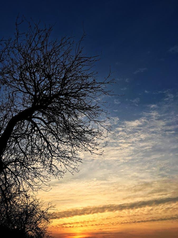 Solnedgång träd arkivbild