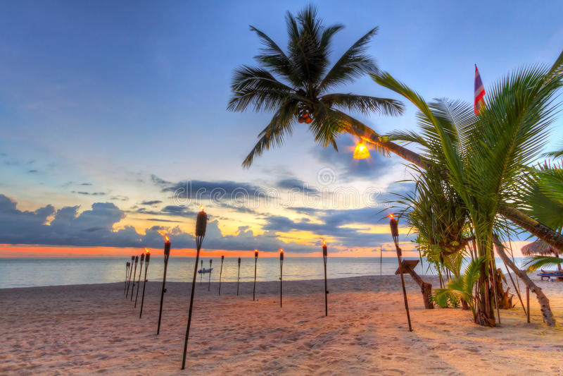 Solnedgång under tropisk palmträd på stranden