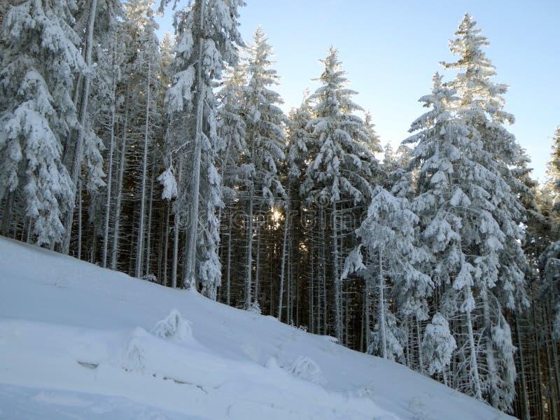 Solnedgång utöver alpin skog arkivfoton