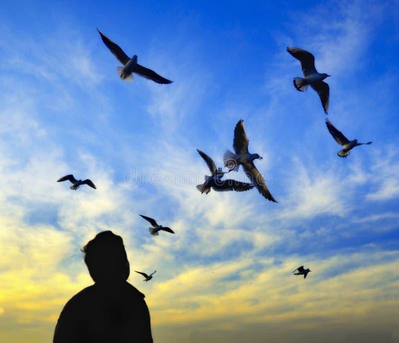 Solnedgångdans av stort nöje för seagullsklocka arkivfoton