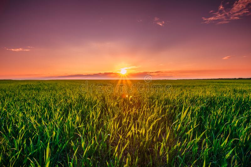 SolnedgångDawn Sunrise Sky Above Rural landskap av grönt vete Fie arkivfoton