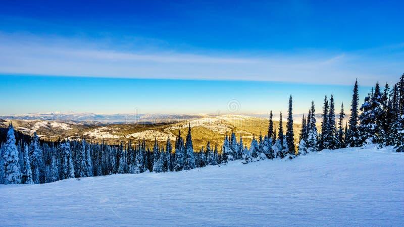 Solnedgången över snön täckte träd i vinterlandskapet av det höga alpint på skidasemesterorten av solmaxima royaltyfria foton