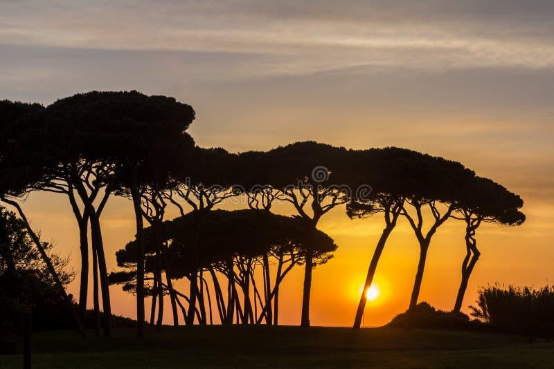 Solnedgången bak Tuscan sörjer träd arkivbilder