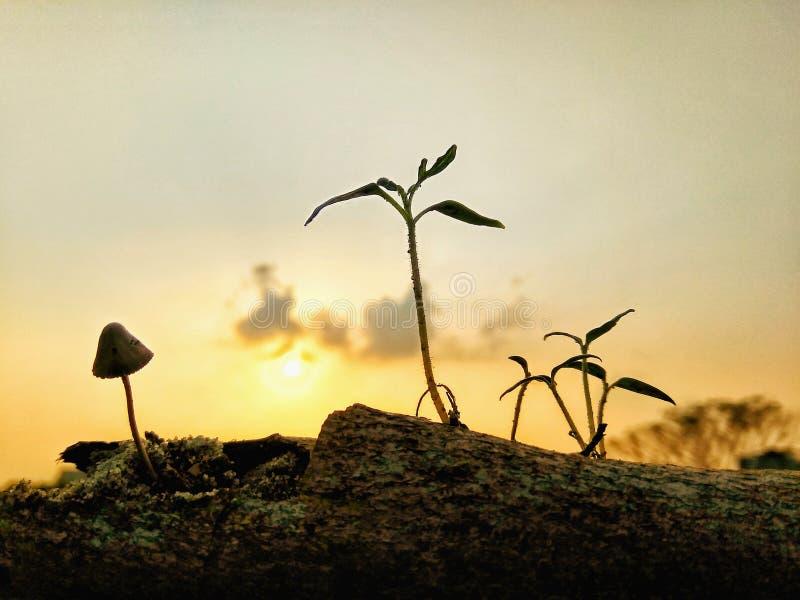 Solnedgången, förbannelsen eller välsignelsen? royaltyfri fotografi