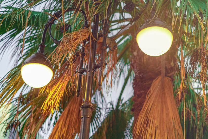 Solnedgången, gatalampan och palmträd i parkerar royaltyfri foto