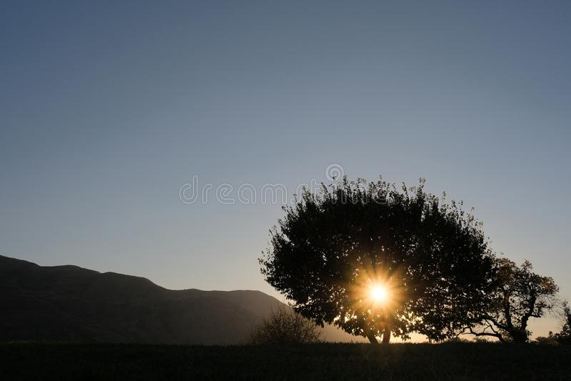 Solnedgången i bergen, solens strålar gör deras väg till och med kronan av trädet fotografering för bildbyråer