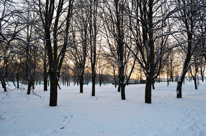 Solnedgången i vinterskogen, träd parkerar in på solnedgångbakgrund fotografering för bildbyråer