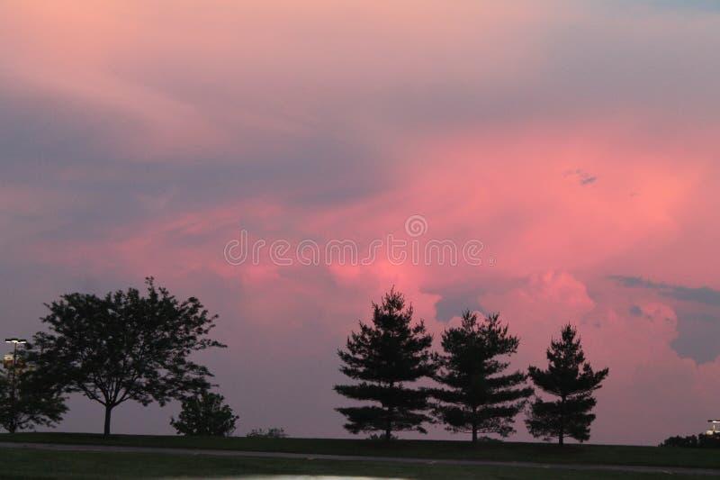 Solnedgången med sörjer träd royaltyfri foto