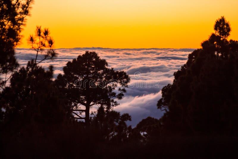 Solnedgången ovanför molnen med konturn av sörjer träd arkivfoton