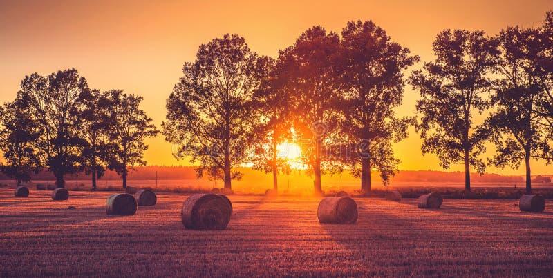Solnedgångfält arkivfoto