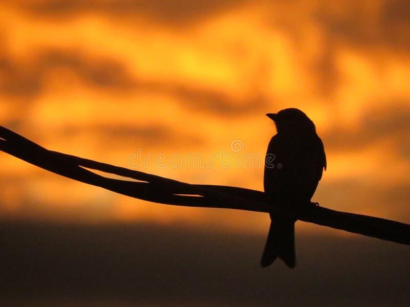Solnedgångfågel arkivbild