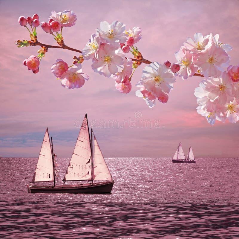 Solnedgånghavet med segelbåtar, den blommande körsbäret fattar arkivfoto
