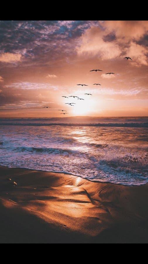 Solnedgånghimmelfåglar arkivbilder