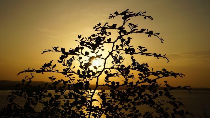 Solnedgångkast trädet arkivbilder