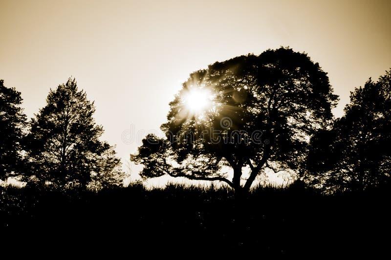Solnedgångkontur fotografering för bildbyråer
