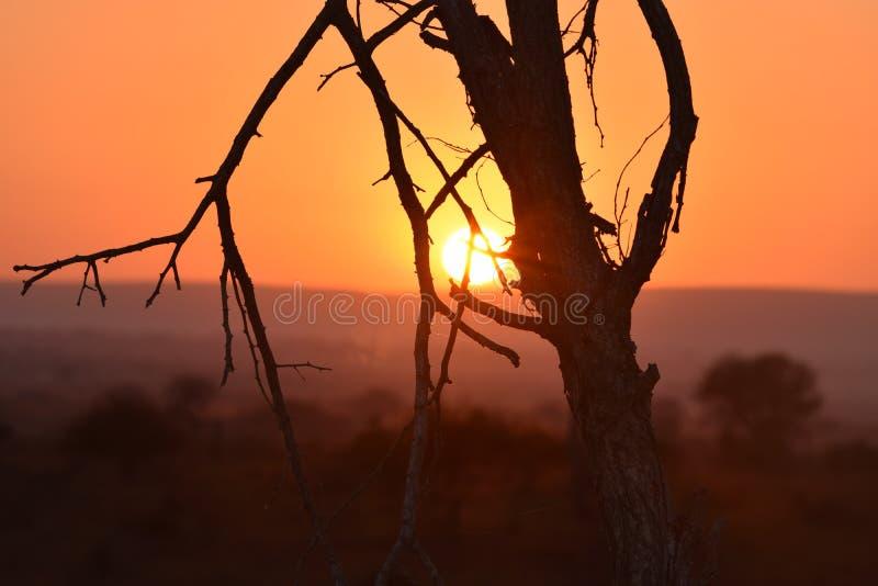 solnedgånglöneförhöjningen Kruger parkerar Sydafrika arkivbild