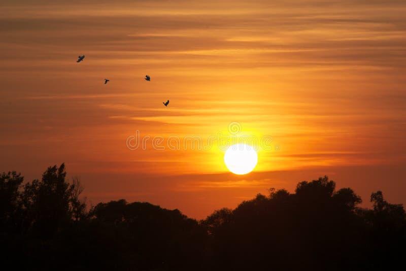 Solnedgånglandskap med fåglar royaltyfria bilder