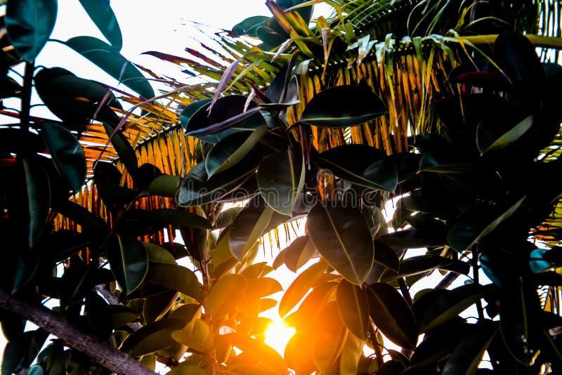 Solnedgångljuspasserande till och med träd royaltyfri bild