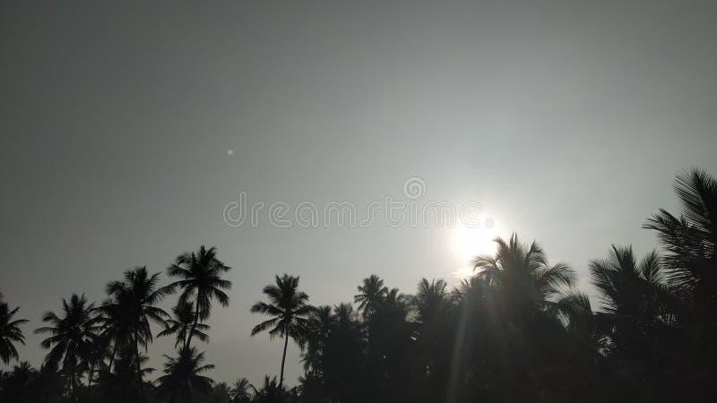 Solnedgångmorgon royaltyfria bilder