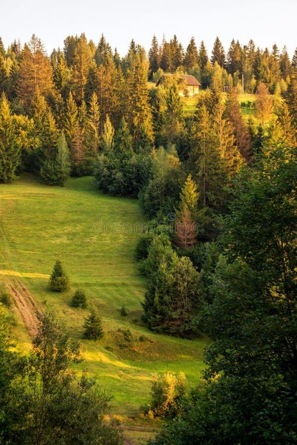 Solnedgångpinjeskog royaltyfri fotografi