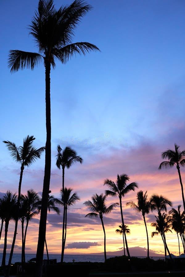 Solnedg?ngsikt av palmtr?d och havet i Maui, Hawaii royaltyfri bild