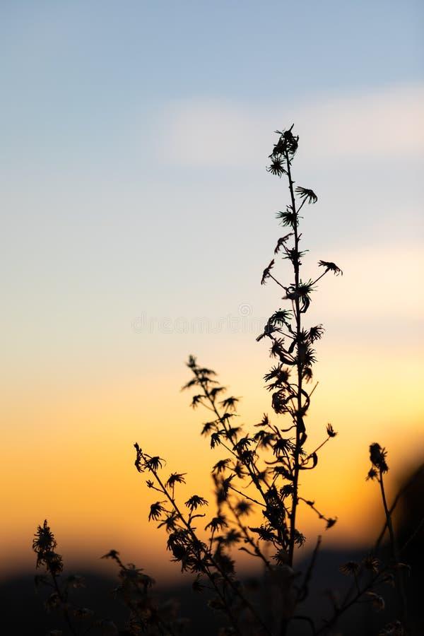 Solnedgångsikt med konturerna av örter och växter royaltyfria foton