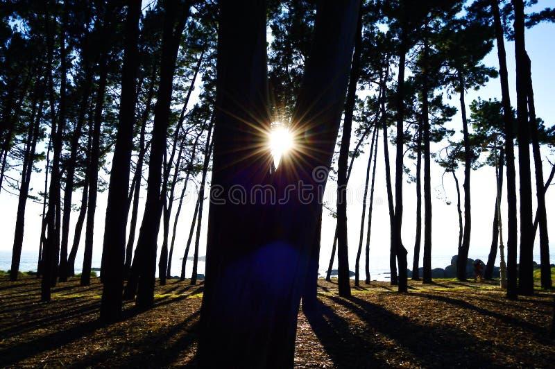 Solnedgångsikt - silhoutte fotografering för bildbyråer