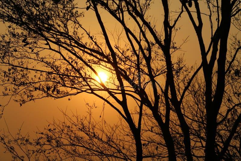 Solnedgångsikter till och med träden royaltyfria bilder
