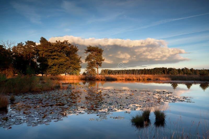 Solnedgångsolljus över den lösa sjön med näckrors royaltyfria bilder