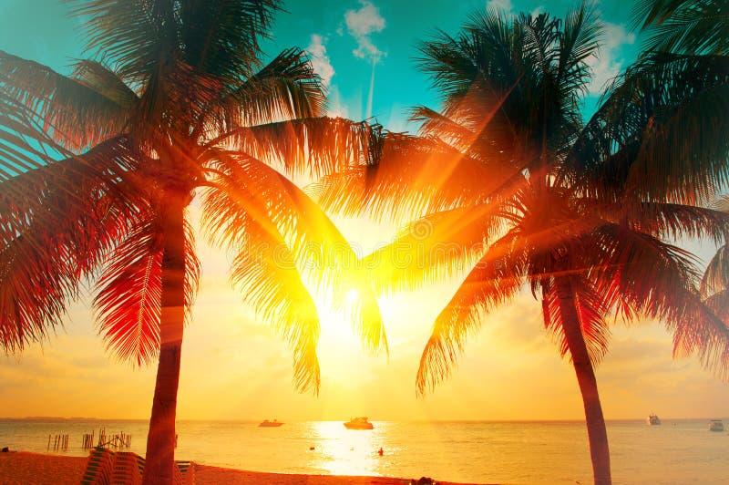 Solnedgångstrand med den tropiska palmträdet över härlig himmel Gömma i handflatan och härlig himmelbakgrund Turism semesterbegre fotografering för bildbyråer
